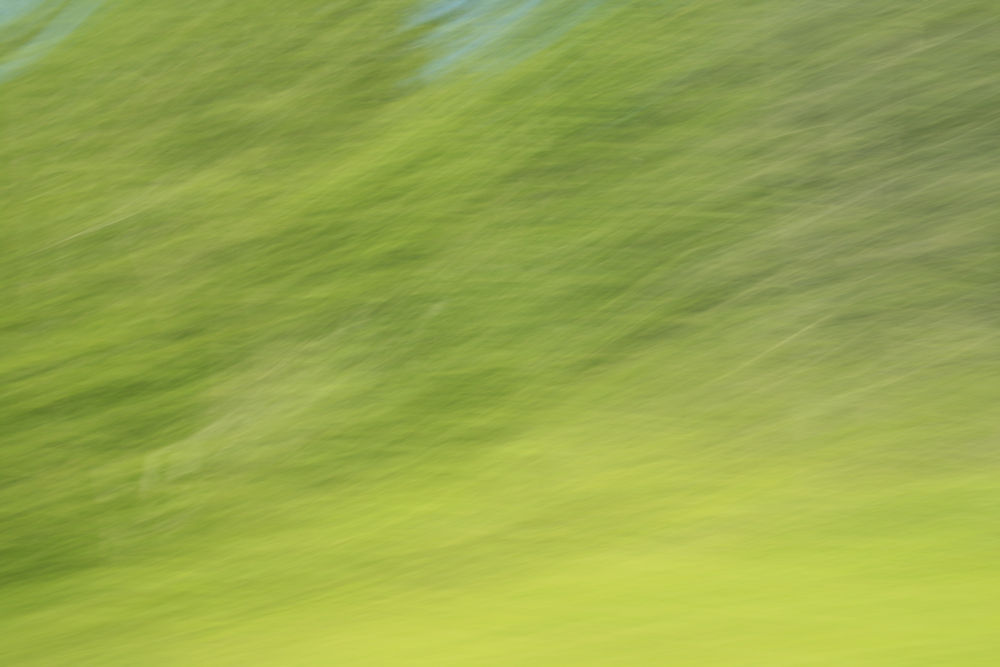 Photo of trees seen from a speeding car